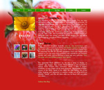 Studio Strawberry: Photography Art Web Template